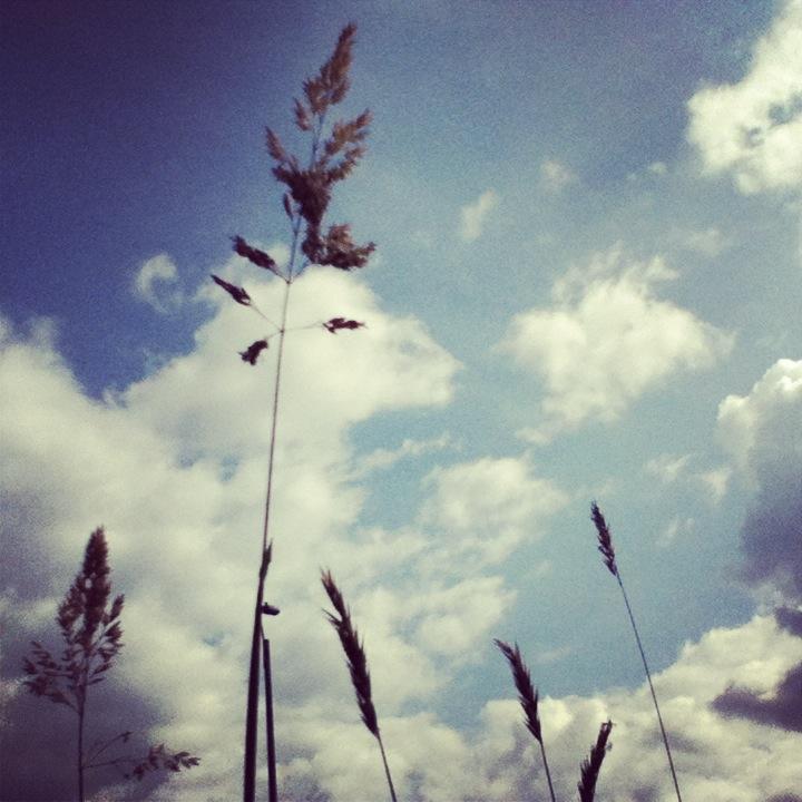 Photo 010